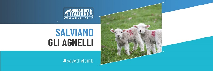 Banner Save the Lamb 2019