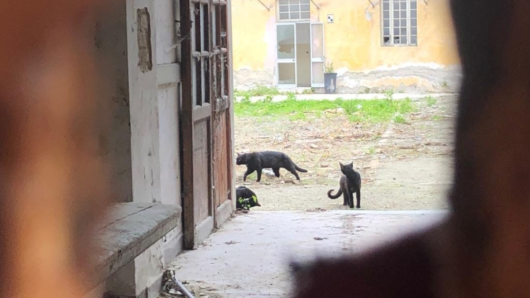 Teramo - Sit-in per tutelare i gatti dell'ex ospedale psichiatrico