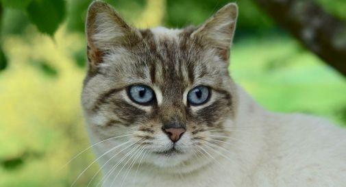 cat-4192467_960_720_0