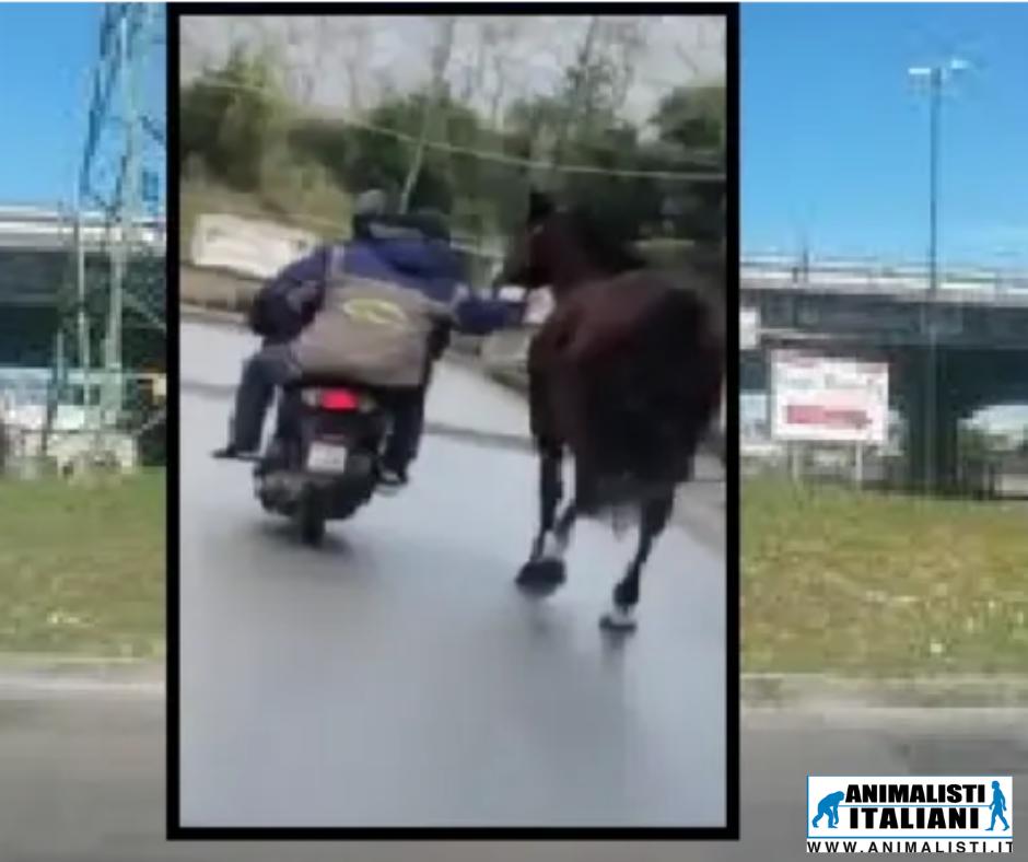 Animalisti Italiani
