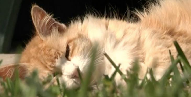 uccide-gatti-Francia