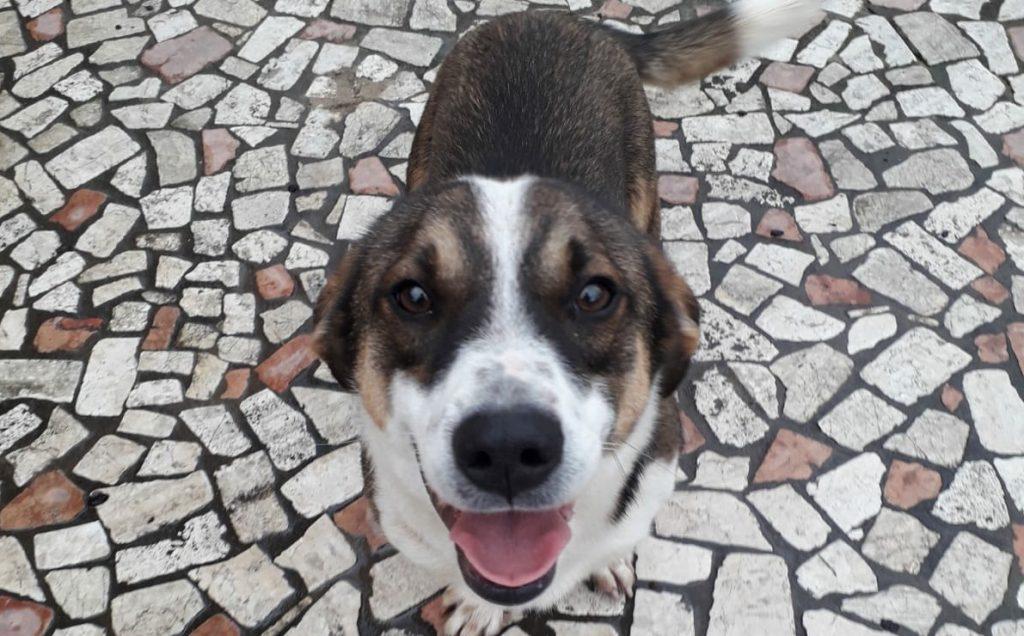 Cane ucciso a Priverno (LT)
