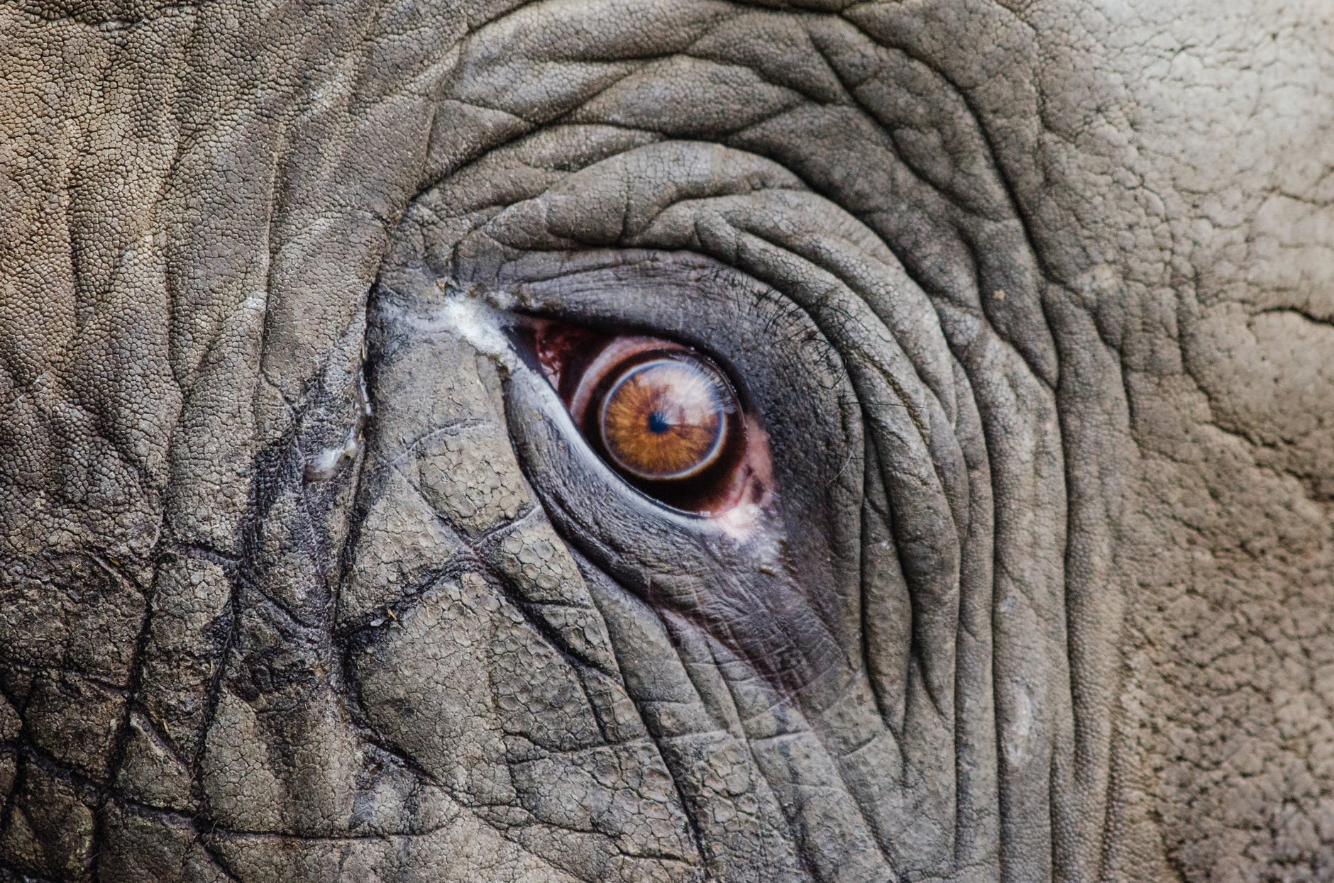 Dolore_elefantessa