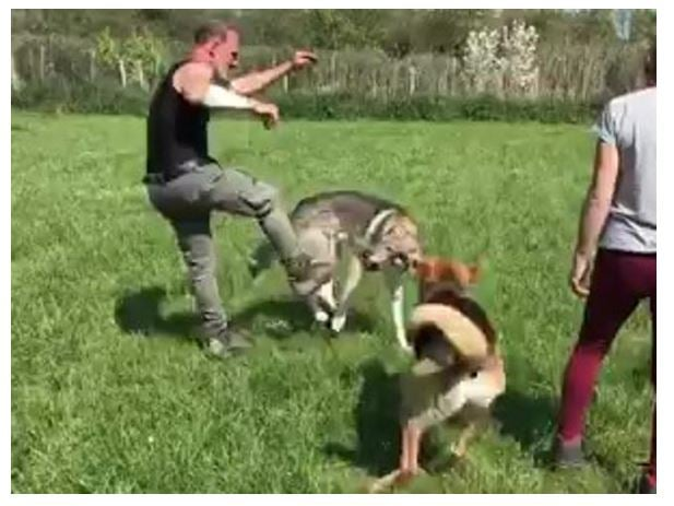 Claudio Mangini prende a calci un cane