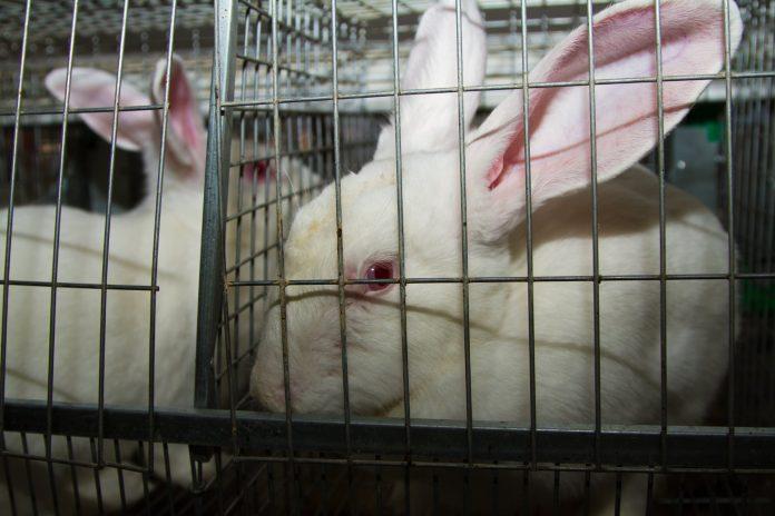 conigli-in-gabbia