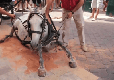 cavalli-botticelle - fonte www.amoreaquattrozampe.it