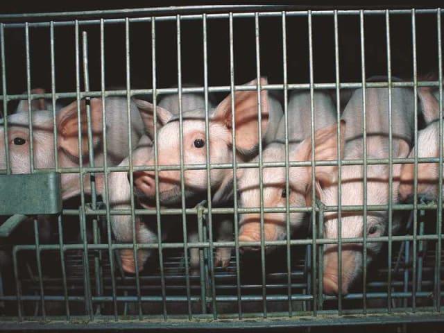 Fonte www.greenplanner.it/