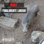 NINA, LA CINGHIALESSA INTRAPPOLATA IN UN FOSSO