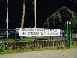 Saronno-2