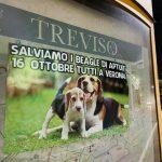 Treviso-1