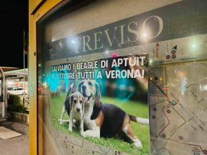 Treviso-2